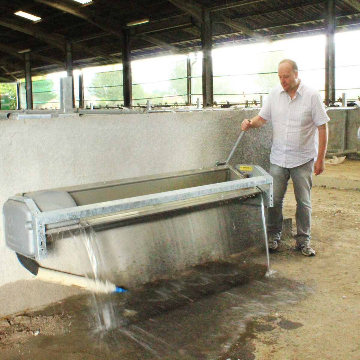 LB230 Stainless Steel Tipping Trough for Dairy Cows