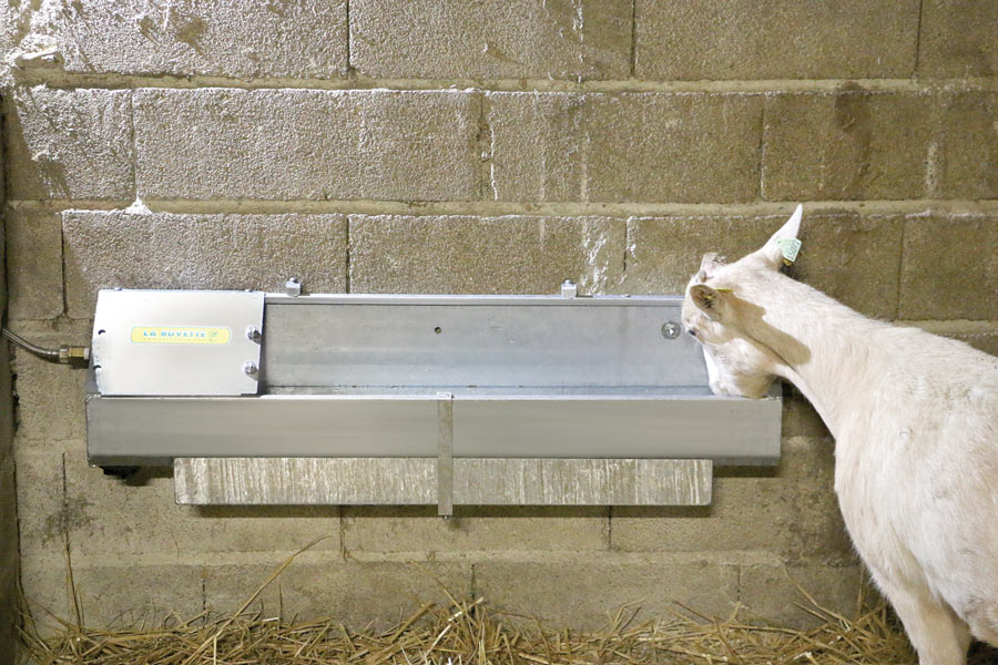 OVICAP INOX 240 Stainless steel DRINKING TROUGH
