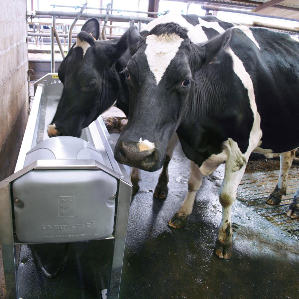 Abreuvoir pour vaches laitières GV150