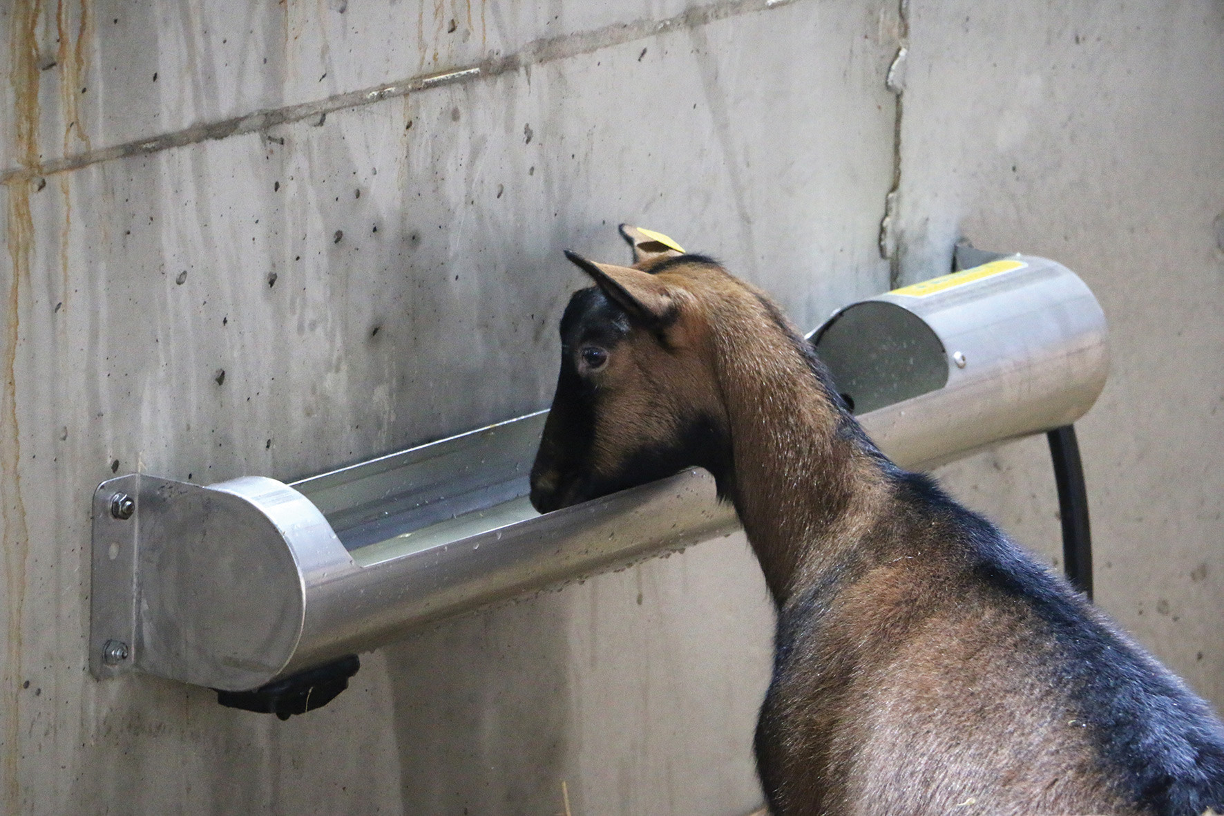 OVITUBE 210 Stainless steel trough for sheep and goats